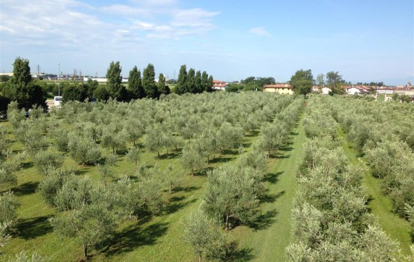 l-uliveto-olio-ducale-a-cividale-del-friuli (02)
